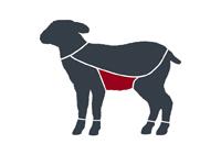 taglio-agnello-pancia